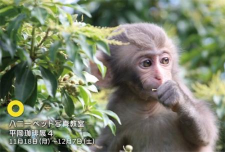 2013秋うめぐみ平こー.jpg