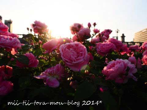 20140510f.jpg