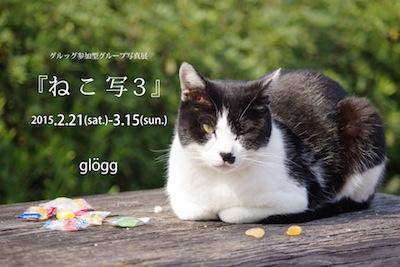 2015ねこ写3.jpg