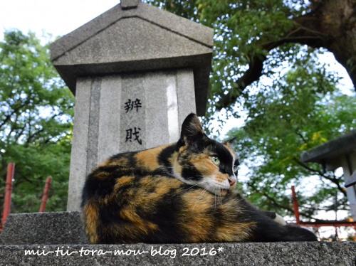 20160811.jpg